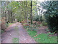 TQ3929 : Bridleway waymarker to branch away from driveway at Newnham's Wood by Dave Spicer