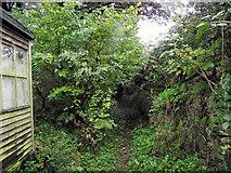 SJ8959 : Entering the trees by Jonathan Kington