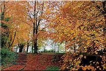 J3996 : Autumn at Glenoe 2010-2 by Albert Bridge
