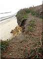 TM5282 : Topsoil hanging over the edge at Covehithe by Evelyn Simak