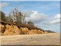TM5382 : Dead trees on the edge of Long Covert, Benacre by Evelyn Simak