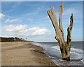 TM5382 : The famous dead tree in the sea by Benacre Broad by Evelyn Simak