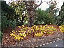 TQ1776 : Flowers by the path in Kew Gardens by Paul Gillett
