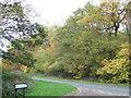 TF1601 : Trees near Westhawe in Bretton, Peterborough by Richard Humphrey