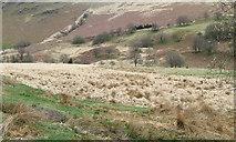 SN8056 : Across Cwm Tywi from near Dolgoch Hostel by Roger  Kidd
