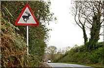 "J4846 : ""Deer"" sign near Downpatrick by Albert Bridge"