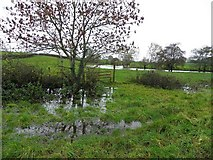 H5070 : Flooded field, Donaghanie by Kenneth  Allen