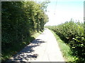 ST3793 : Contrasting hedges north of Garn Farm by Jaggery