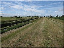 TL4279 : Ouse Washes bank by Hugh Venables