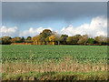TM1888 : A colourful hedgerow west of the A140 road by Evelyn Simak