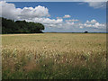 TL4174 : Wheat field by Hugh Venables