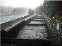 NN9357 : Fish ladder: Pitlochry Dam by Jim Smillie