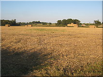 SO8843 : Straw field at Dunstall by Philip Halling