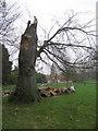 TL3350 : Lightning damage? by Sandy B