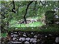 SN1133 : Ruins at Hafod Tydfil (3) by ceridwen