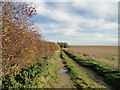 TF6907 : Autumn colours in the hedgerow by Adrian S Pye