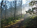 SK2163 : Woodland sunshine by Peter Barr