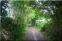TQ6059 : Pilgrims' Way (North Downs Way) by N Chadwick
