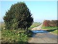 TF8730 : Holly bush at Dunton Patch, Norfolk by Richard Humphrey