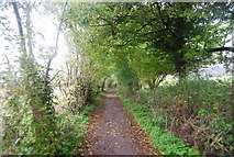 TQ6059 : North Downs Way (Pilgrims' Way) by N Chadwick