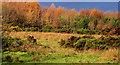 J3370 : Autumn at the Lagan Meadows, Belfast by Albert Bridge
