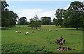 SO7786 : Parkland near Birdsgreen by Stephen Richards