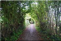 TQ5959 : North Downs Way (Pilgrims' Way) by N Chadwick