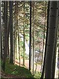 SN7673 : Forest in the Ystwyth gorge, Hafod estate by Rudi Winter