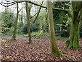 TQ2256 : A corner of Walton Downs by Robin Webster