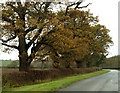 SE9845 : Roadside Autumnal Trees by Andy Beecroft