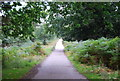 TQ5453 : The Greensand Way, Knole Park by N Chadwick