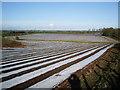 NY3867 : Strip farming near Howend by Alexander P Kapp
