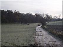 TL8162 : Walkers by Keith Evans