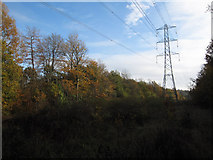 TQ1562 : Electricity cables through Great Oaks by Hugh Venables