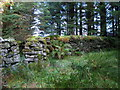 """NY6475 : """"Arm"""" of the sheepfold by Spur Rigg by Mike Quinn"""