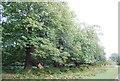 TQ5452 : Chestnut trees, Chestnut Walk, Knole Park by N Chadwick