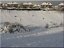 NT2470 : Still sledging in Braidburn Valley Park by M J Richardson