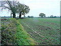 SO8131 : Arable field edge by Jonathan Billinger