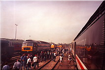 SX9193 : Sidings at Exeter Railway Station by nick macneill