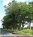 NU0305 : Trees near Cartington by Stephen Richards