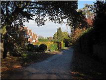 TQ1361 : Sandy Drive, Fairmile by Hugh Venables