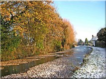 SO8171 : Autumn leaves on the Staffordshire & Worcestershire Canal by P L Chadwick