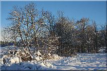 NJ3558 : Winter Scene by Anne Burgess