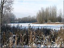 SJ8851 : Ford Green Nature Reserve in winter by Phil Eptlett