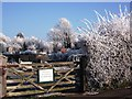 SP2972 : Frost at Spring Lane allotments by John Brightley