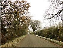 TM3795 : Wash Lane, Hales by Adrian S Pye