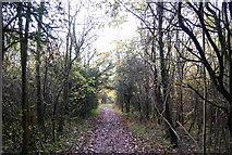 TQ5359 : The North Downs Way by N Chadwick