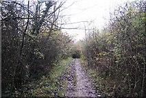 TQ5359 : A muddy North Downs Way, Otford Mount by N Chadwick