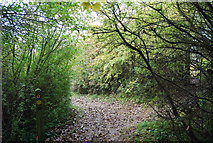 TQ5359 : Waymark, North Downs Way, Otford Mount by N Chadwick