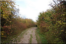 TQ5359 : North Downs Way descending to Otford by N Chadwick